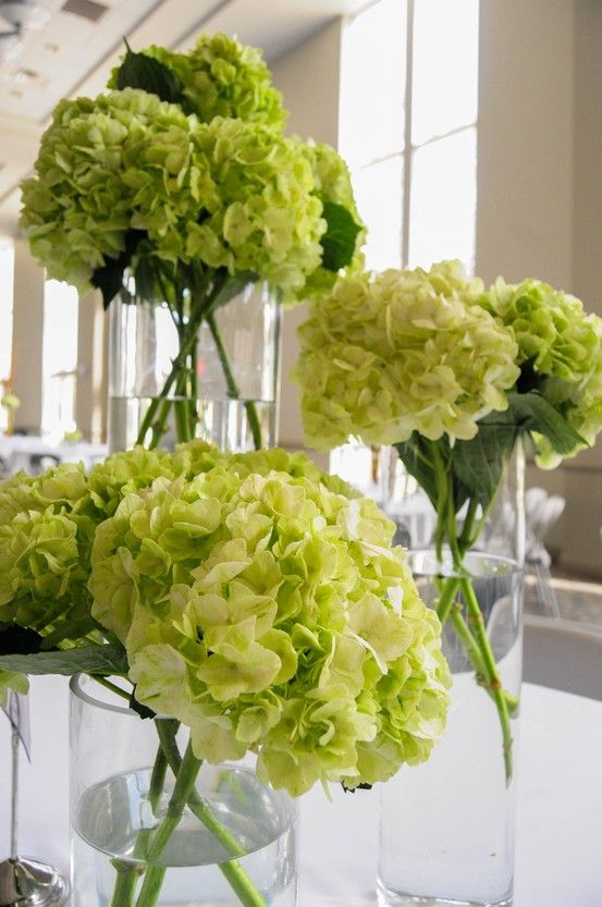 Simple cluster centerpiece using tall vases and green hydrangeas.