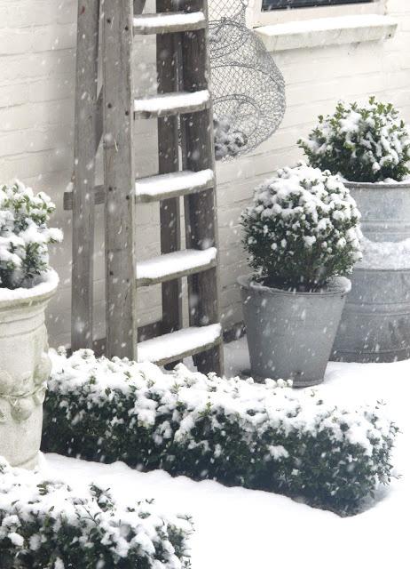 #snow #garden #outdoor #winter #tuin #wintertuin #plants #sneeuw #sneeuwen #white #witte #wit <3 #Fonteyn