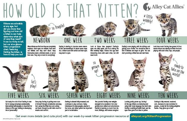 Kitten Age Progression Chart Kitten Season Alley Cat Allies