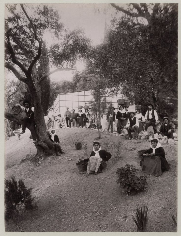 c.1890 s PHOTO GREECE CORFU OLIVE PICKERS ? IN THE FIELD