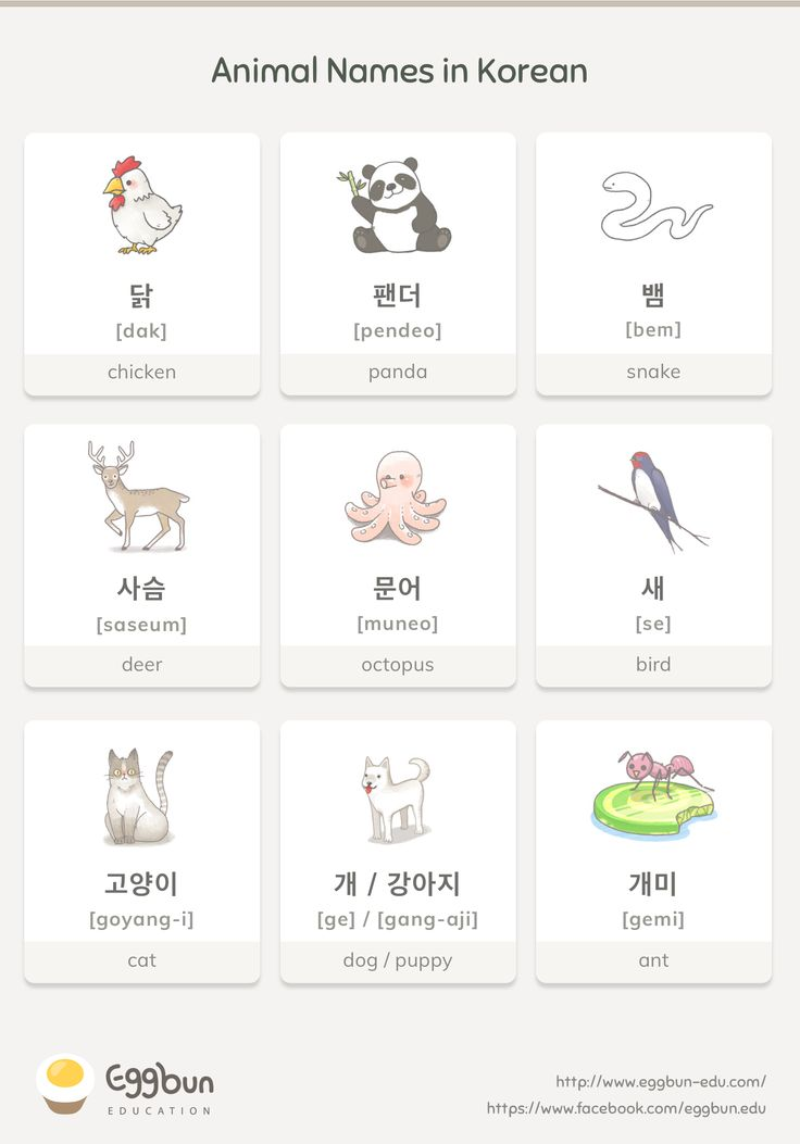 Animal Names in Korean Chat to Learn Korean with E…