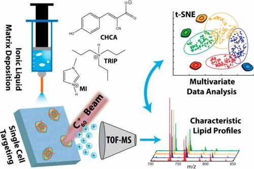 #AChem: Single Cell Profiling Using Ionic Liquid Matrix-Enhanced Secondary Ion Mass Spectrometry for Neuronal Cell Type… #MassSpec