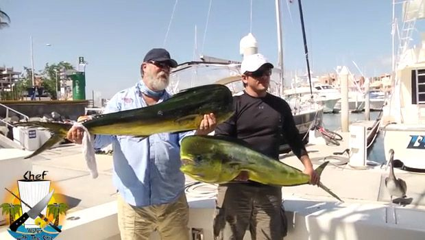 Un lion de mer vole les pêcheurs - http://www.2tout2rien.fr/un-lion-de-mer-vole-les-pecheurs/