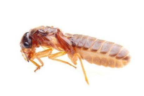 Eliminar las termitas