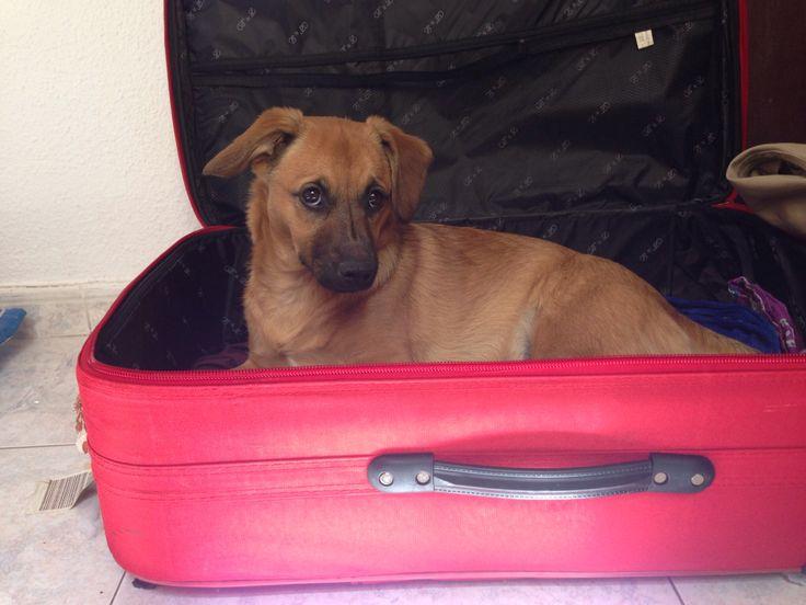 Mami nos vamos de viaje¿