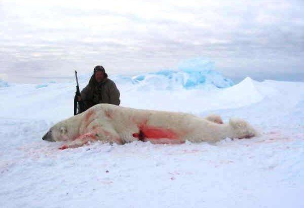 Petition · Stop the legal slaughter of Polar Bears by trophy hunters · Change.org