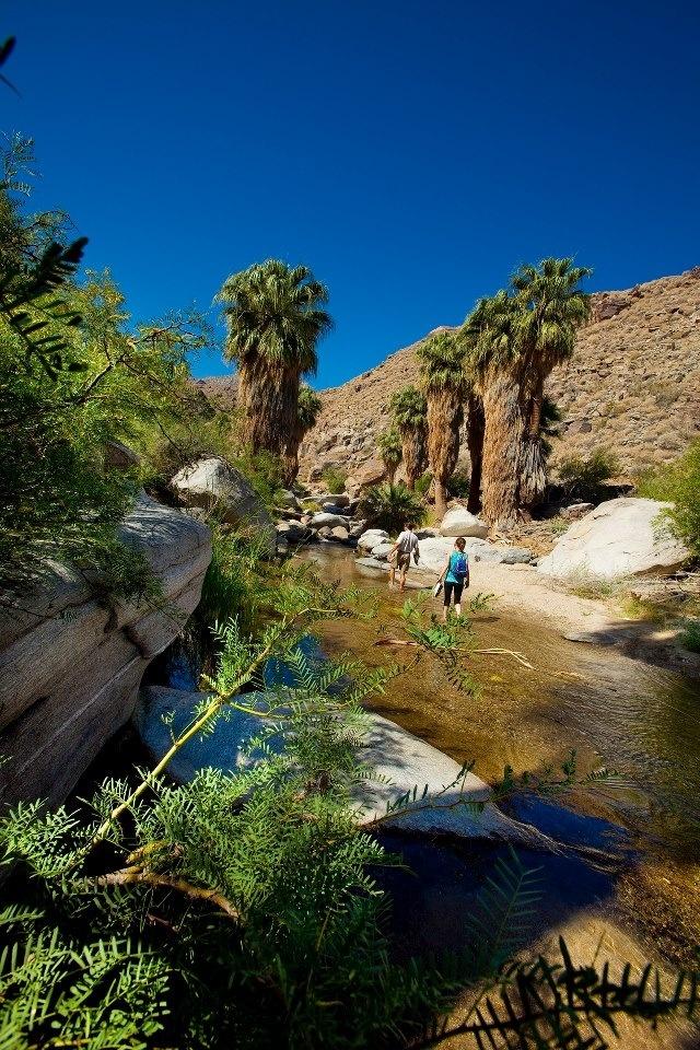 Indian canyon, Palm Springs, Riverside, California