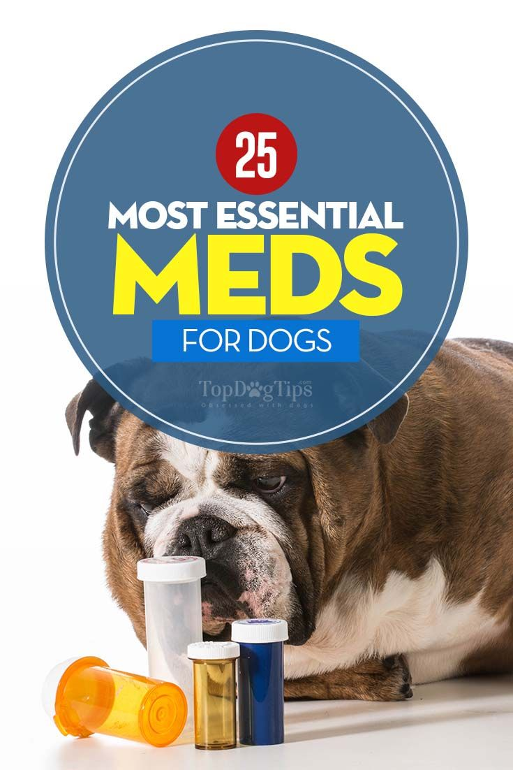 25 Most Essential Dog Meds: Why and When Your Dogs Need Them