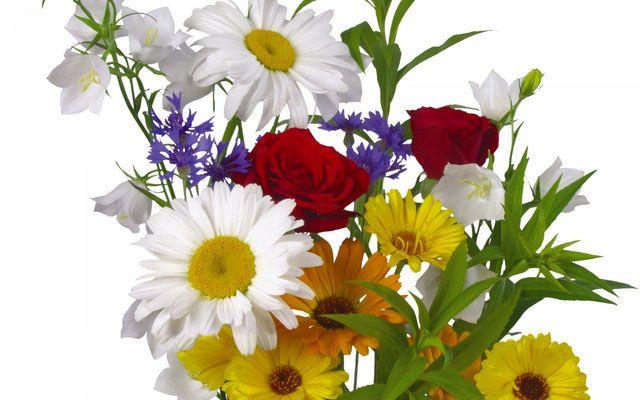 Daisies flowers