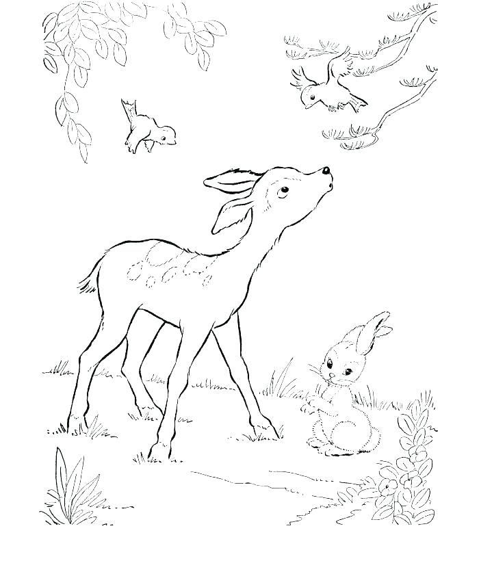 Coloring Page Baby Deer Color Pages Free Mother And Elephant