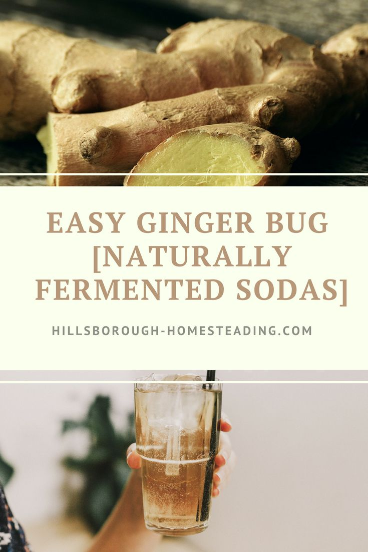 Create this super easy, 5-minute ginger bug to get 100's of naturally fermented, probiotic-packed sodas. This recipe walks you through how to make a ginger bug, and I've even included a step-by-step video to get you started! Plus a list of fermentation health benefits and healthy flavored soda recipes. | Hillsborough Homesteading