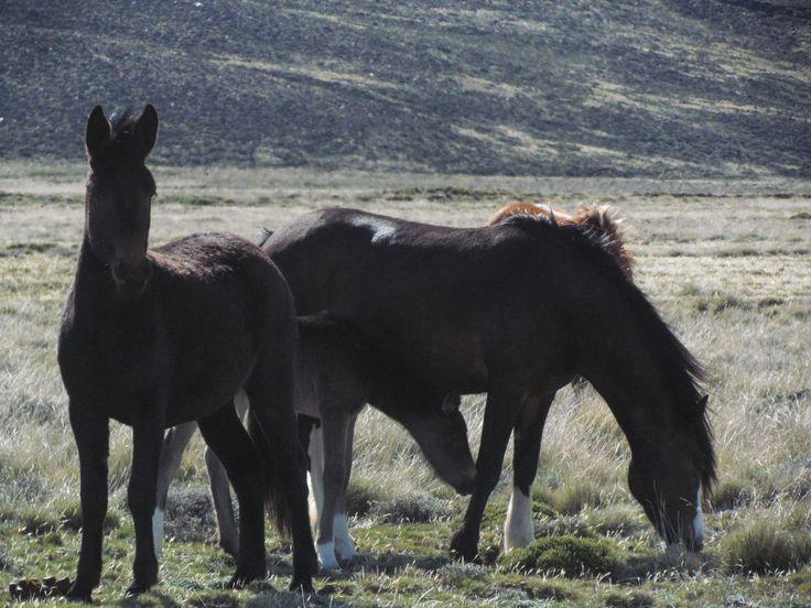 caballos savajes
