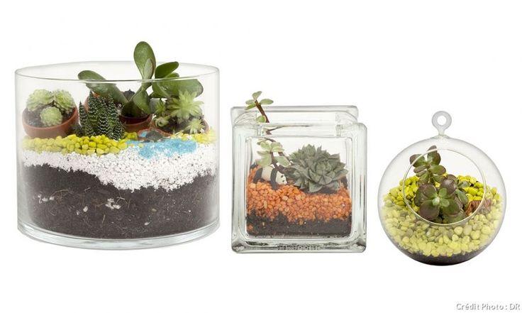 Le terrarium : un coin de nature miniature dans votre intérieur. Voici nos conseils pour vous équiper, réaliser et entretenir facilement le vôtre.                                                                                                                                                     Plus