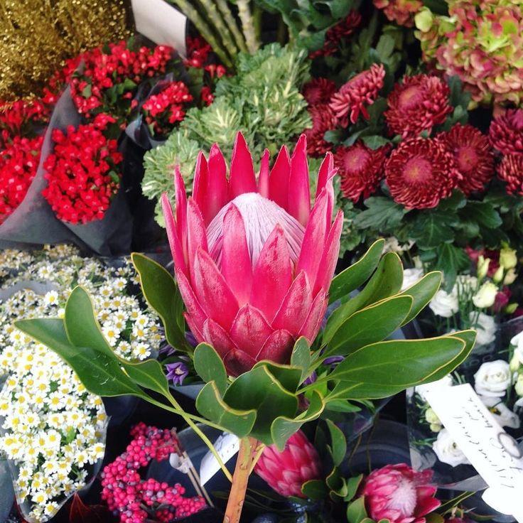 Delivering these beauties today- what a treat! #protea #flowersofinsagram #gardeniaoflondon #wimbledon #wimbledoncommon #wandsworthcommon #teddington #teddingtonflorist #florist #londonflorist #southafrica #flowersofsouthafrica #rijnsflowers