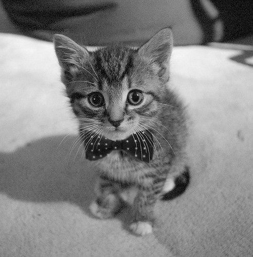 Pin It Friday: The Cute Animals of Pinterest Take 3