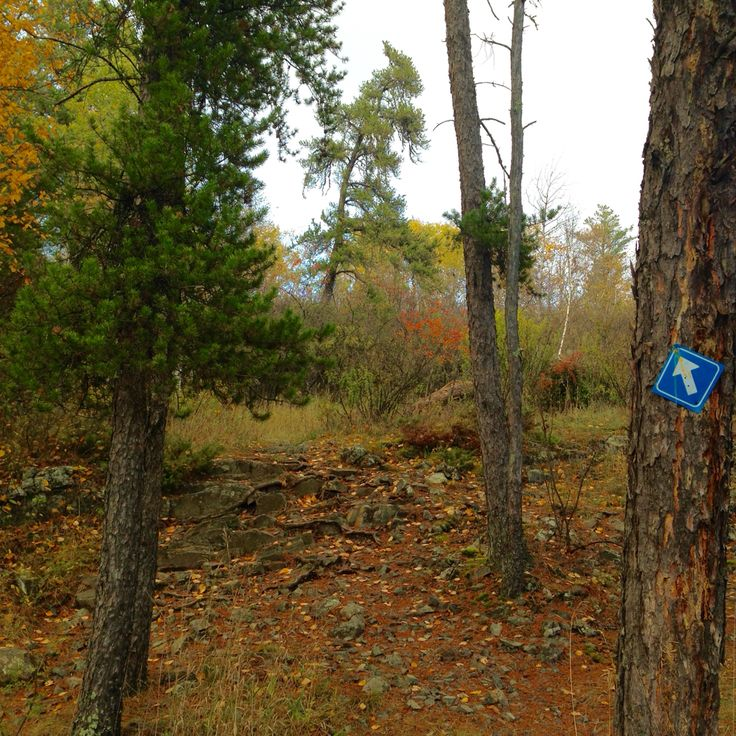 The Trail 10/08/16 Dragon Fire Trail, Whiteshell Provincial Park, Mb Photo by Michelle Lambert