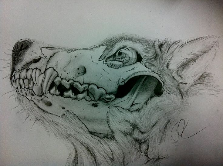 wolf skull by Silk86.deviantart.com on @deviantART