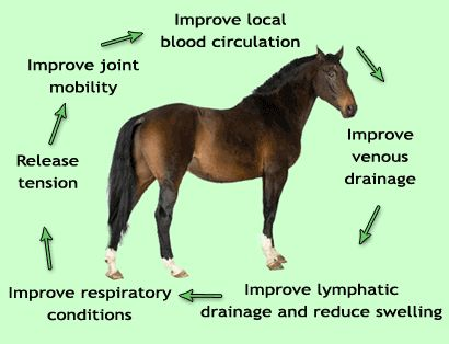 56 Best Horse Manager Images On Pinterest | Horses, Horse Anatomy