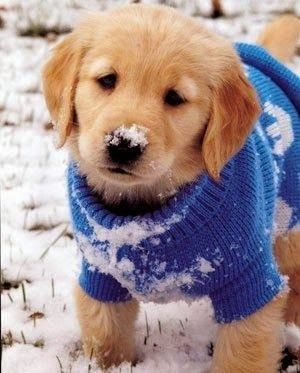 At least this little one has a sweater, very sweet.. ~ Cute puppy and dog