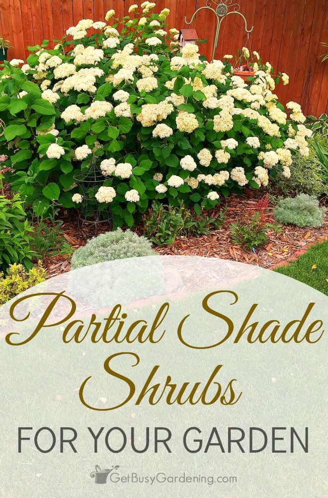 partial shade shrubs for your garden - Flower Garden Ideas Partial Sun