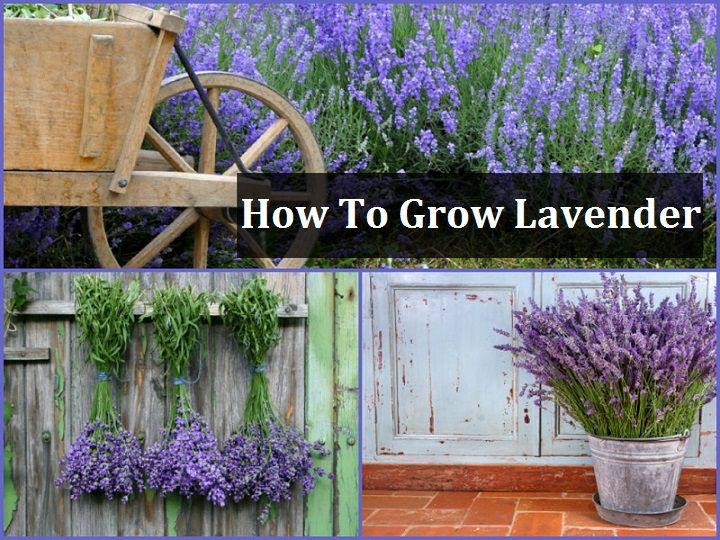125 best plantas e flores images on pinterest plants backyard and backyards. Black Bedroom Furniture Sets. Home Design Ideas