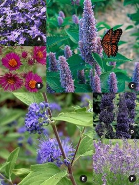 17 best images about butterfly garden on pinterest for Pre planned landscape