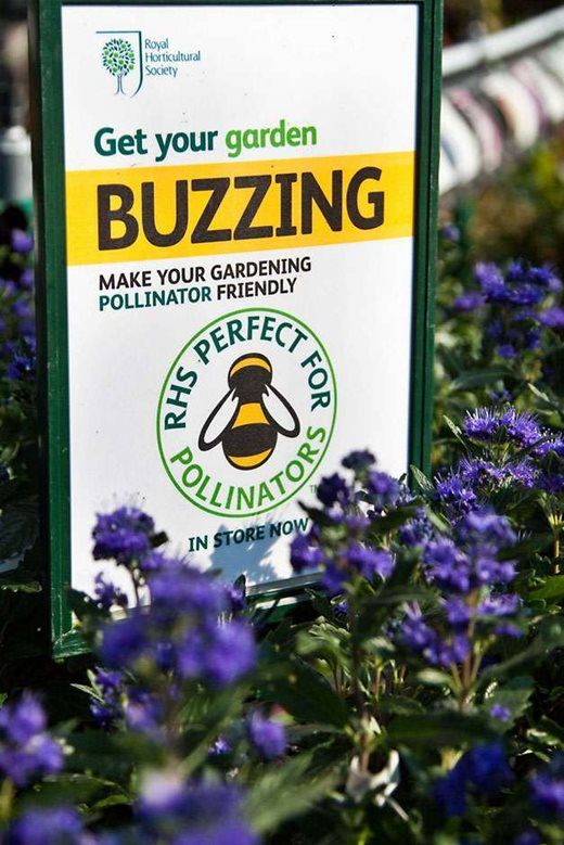 Get your garden buzzing with our free RHS Plants for Pollinators list / RHS Gardening