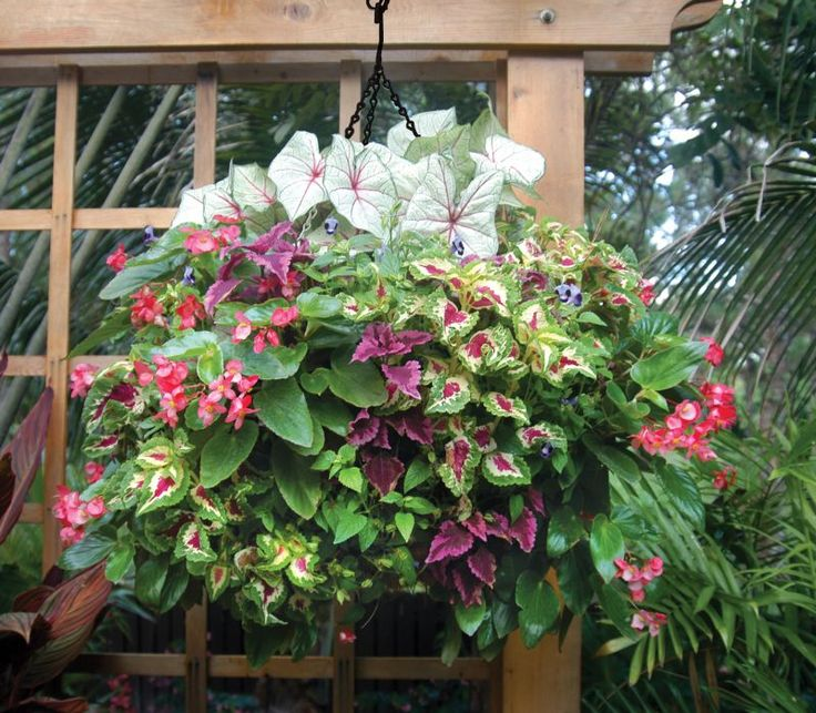 Hanging Basket Flowers Part Shade : Best ideas about flower baskets on hanging