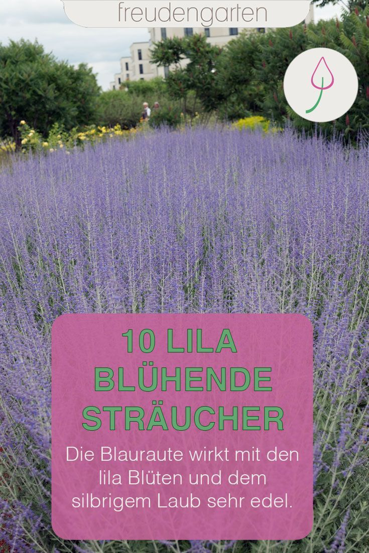 Die Schonsten Straucher Mit Lila Bluten Lila Pflanzen Straucher Garten Garten