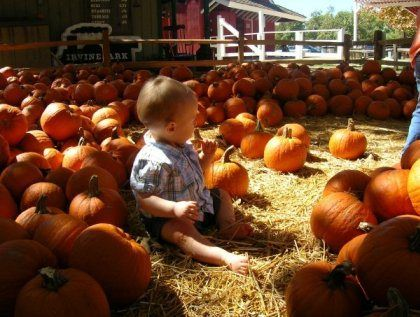 Best Pumpkin Patches In Los Angeles Tanaka Farms Pinterest