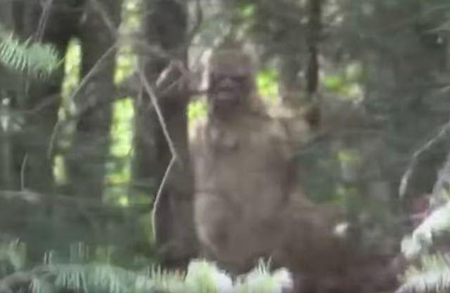 Morbid Stories Of Bigfoot Encounters & Habituation | The Fortean Slip