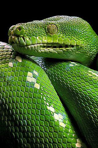 Emerald green snake. Amazing + Amusing Animals
