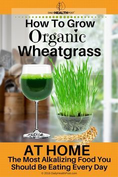 Wheatgrass is the latest trend in healthy eating that has people scratching their heads.    Wheatgrass isn't the same kind of grass that grows on your lawn. Instead, it's the young sprouts of the wheat plant.