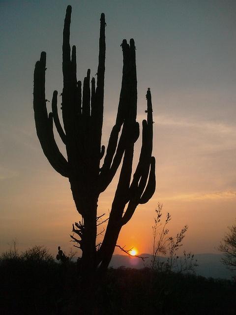 Juchipila, Zacatecas, Mexico