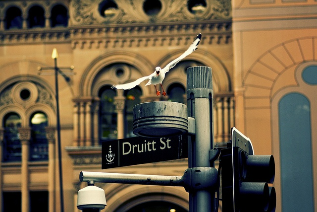 A seagull at the QVB, Sydney