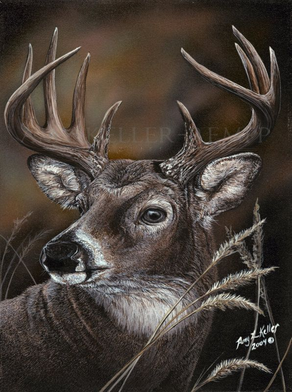 """Realism by Amy Keller-Rempp Art. """"Autumn Day"""", 18"""" by 24"""". Original sold to a couple in Montana. Very popular among nature lovers and hunters. Available in giclee print and fine art cards."""
