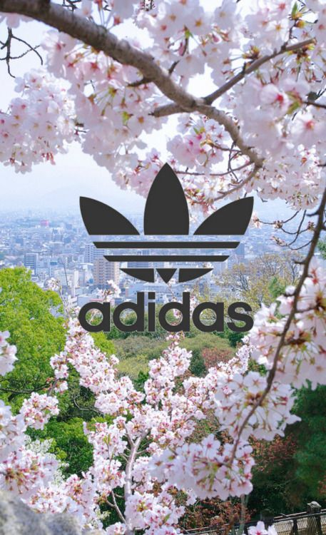 Fundo da Adidas de Sakura (árvore)