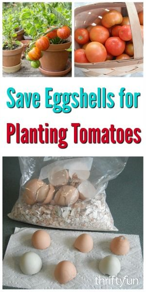Adding eggshells to your garden and compost is a common all natural way to add key nutrients to the soil. This is a guide about save egg shells for planting tomatoes.