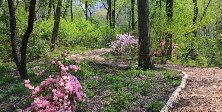 Hallett Nature Sanctuary  A secret section of Central Park will soon re-open to public after 82 years