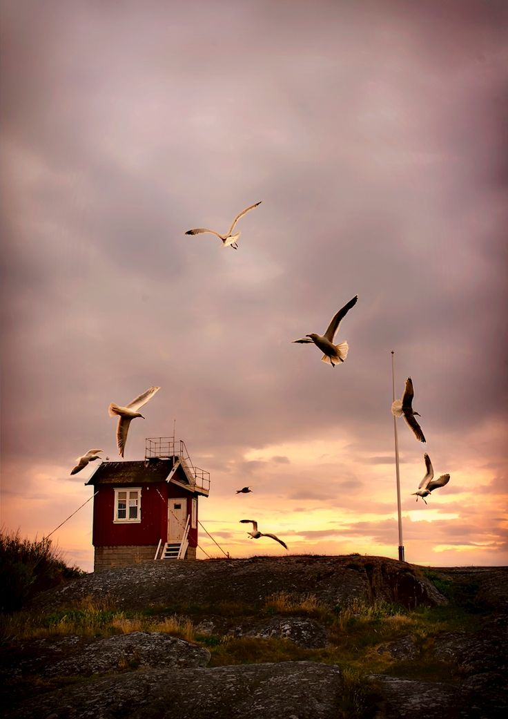 Katarina Holmstrom - Lotshuset på Kätingön. Beautiful sunset with seaguls. Available as poster and laminated picture at Printler, the marketplace for photo art.