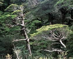 bosque nativo- patagonia chilena