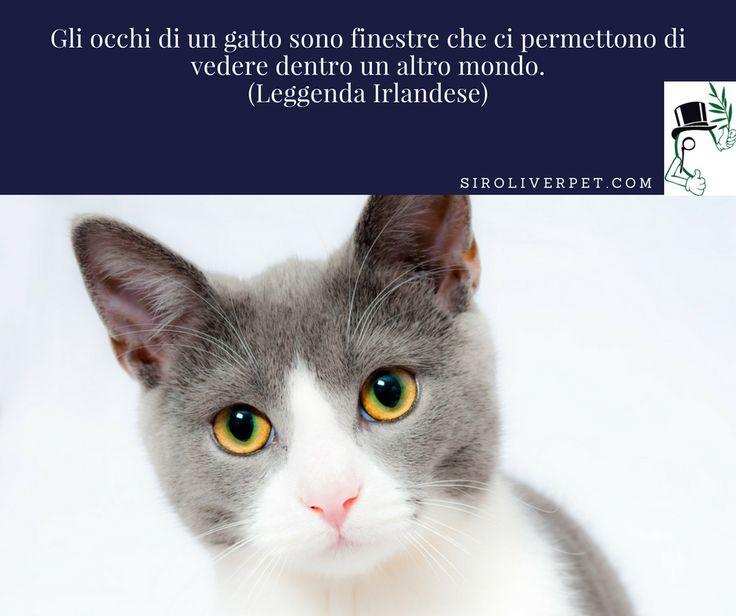 Gli occhi di un gatto sono finestre che ci permettono di vedere dentro un altro mondo. (Leggenda Irlandese)