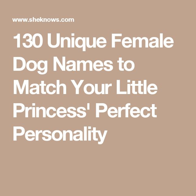 130 Unique Female Dog Names to Match Your Little Princess' Perfect Personality
