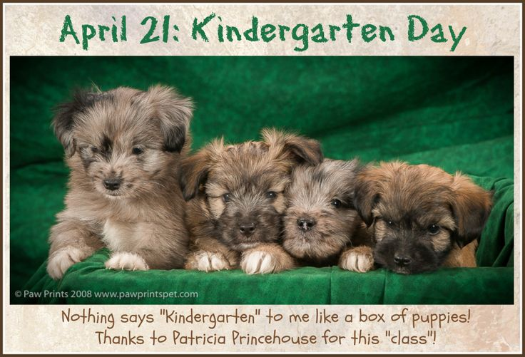 PHOTO OF THE DAY. April 21: Kindergarten Day. Here's a kindergarten class for you!