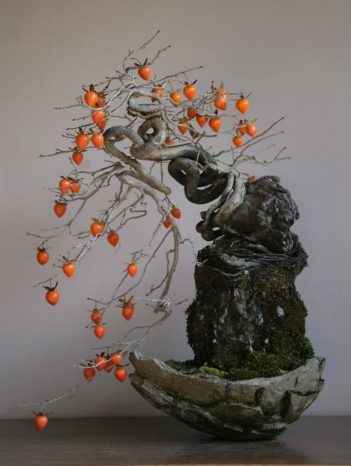 Espectacular Bonsai