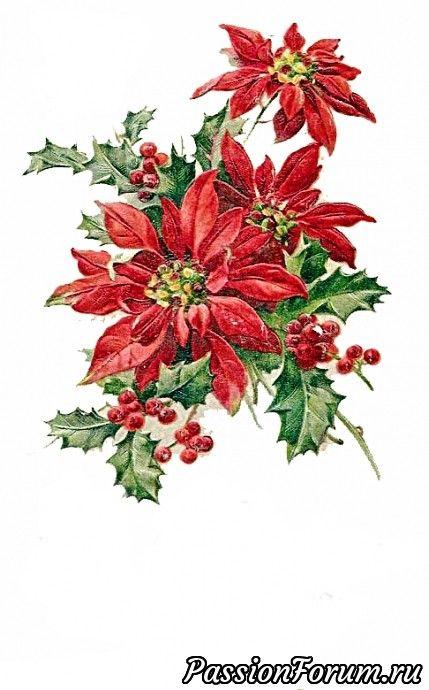 Новогодне-рождественские - запись пользователя Солнышко (Ирина) в сообществе Картинки для творчества в категории Новый год и Рождество