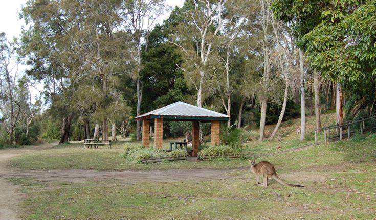 Morriset picnic area, Lake Macquaire State Conservation Area. Photo: Susan Davis/NSW Government