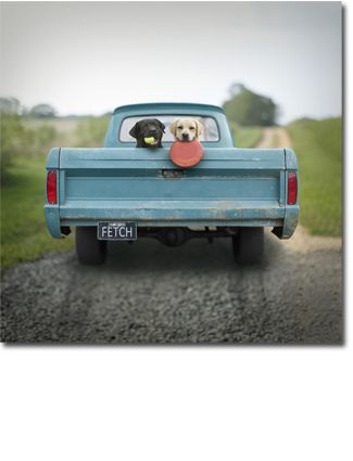 ♥: Labs, Pickup Trucks, Loo Leash, Country Roads, Baby Dogs, Ron Schmidt, Dogs Portraits, Dogs Photo, Animal