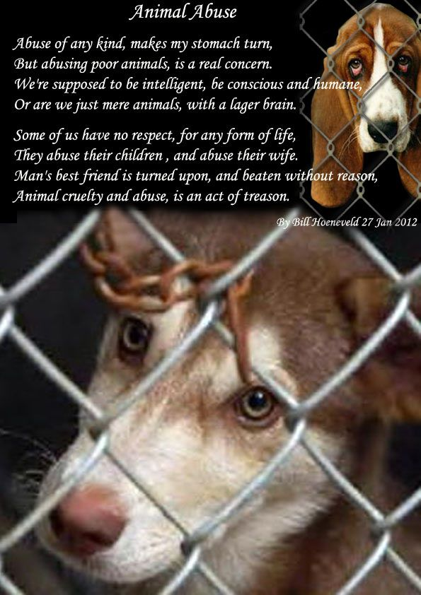 Kindly Not Turn A Blind Eye On Animal Abuse Animals