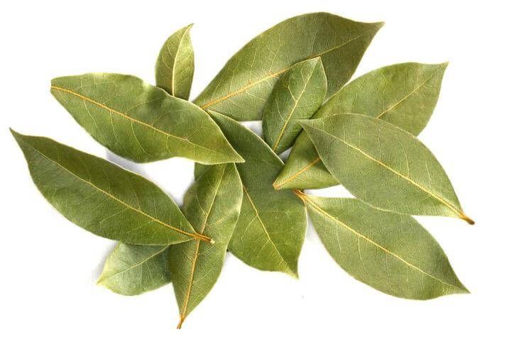 Folha de Louro. Descubra AQUI os surpreendentes benefícios do louro para a nossa saúde e aprenda fazer um chá das folhas.